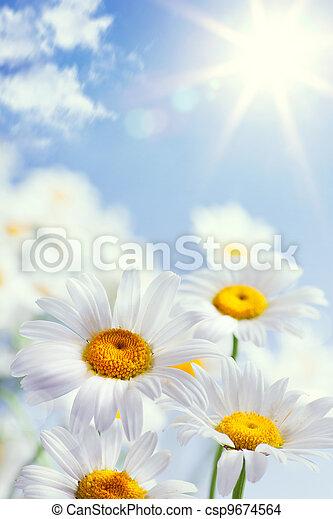 floral, vindima, abstratos, fundo, verão - csp9674564