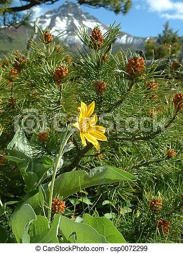flore, alpin - csp0072299