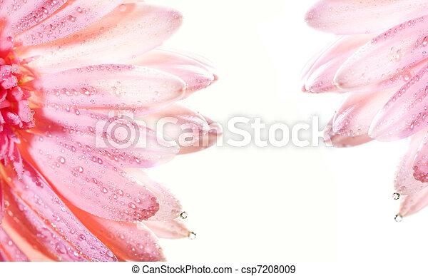 floreale, astratto, cornice - csp7208009