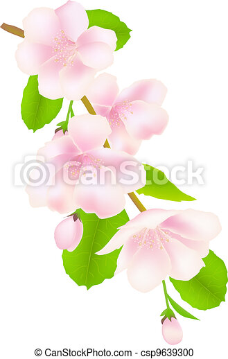 flores, árvore, maçã - csp9639300