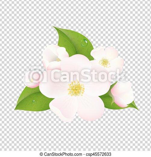 flores, árvore, maçã, fundo, transparente - csp45572633