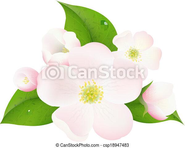 flores, árvore, maçã - csp18947483