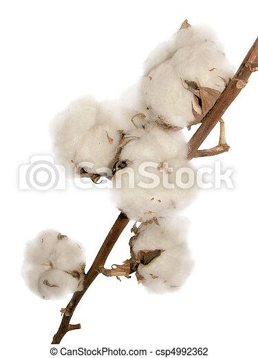 flores, algodão - csp4992362