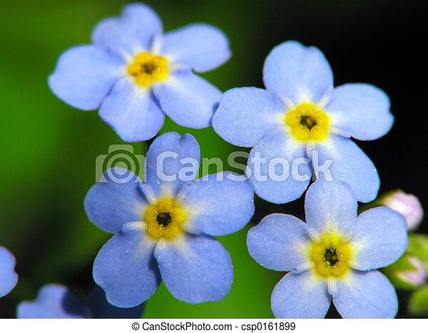 flores azules - csp0161899