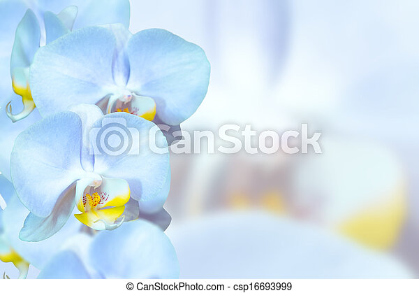 Flores Azules Romantico Orquideas Azul Pastel Romantico Fondo