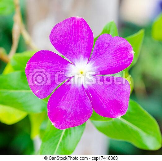 flores - csp17418363