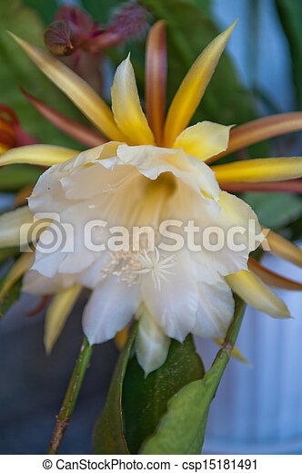 Flores blancas - csp15181491