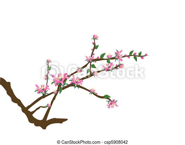 flores côr-de-rosa, árvore, ramos - csp5908042