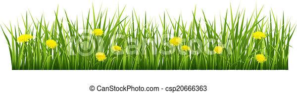 flores, capim, amarela - csp20666363