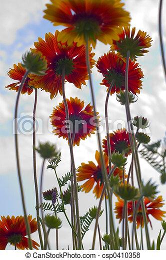 flores, cielo - csp0410358