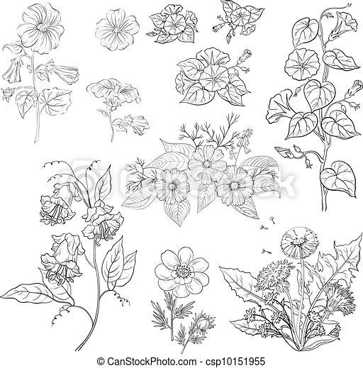 Flores, set, esquema - csp10151955