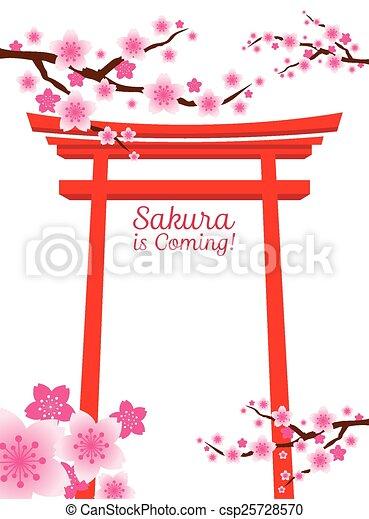 Flores de cerezo, puerta de torii - csp25728570