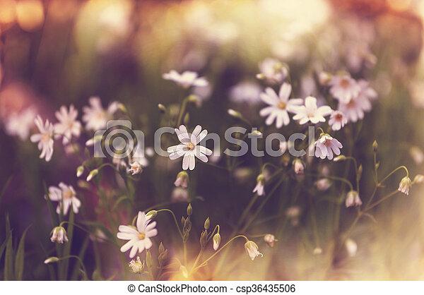 Flores de primavera - csp36435506
