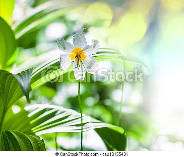 flores del resorte - csp13155431