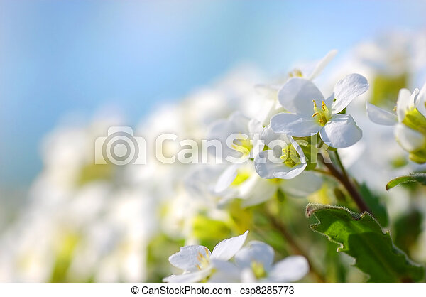 flores del resorte - csp8285773