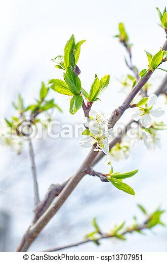 Flores de primavera - csp13707951