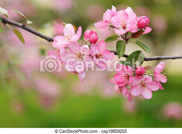 flores del resorte - csp19859255