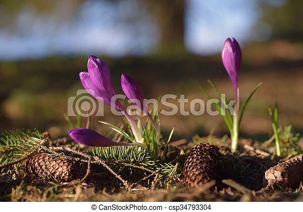 Flores de primavera en el bosque - csp34793304