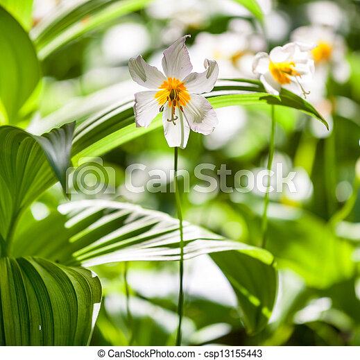 flores del resorte - csp13155443