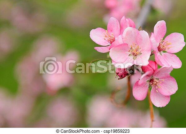 Flores de primavera - csp19859223