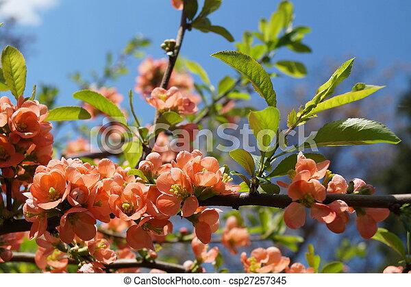 Flores de primavera - csp27257345