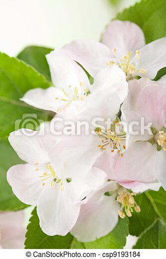 Flores de primavera - csp9193184