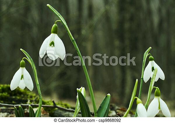 Flores de primavera - csp9868092