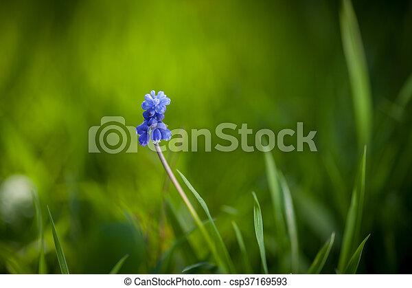 flores del resorte - csp37169593