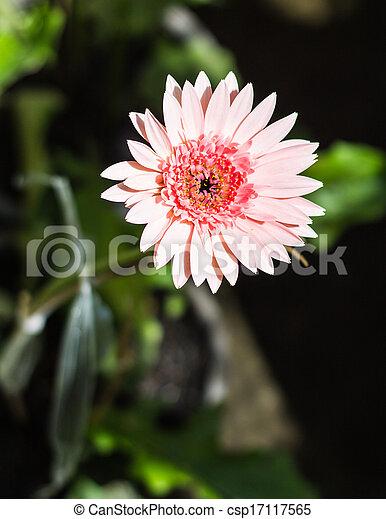 flores del resorte - csp17117565