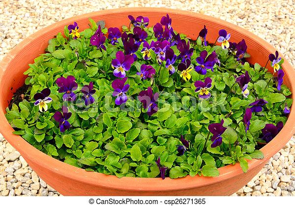 flores del resorte - csp26271365