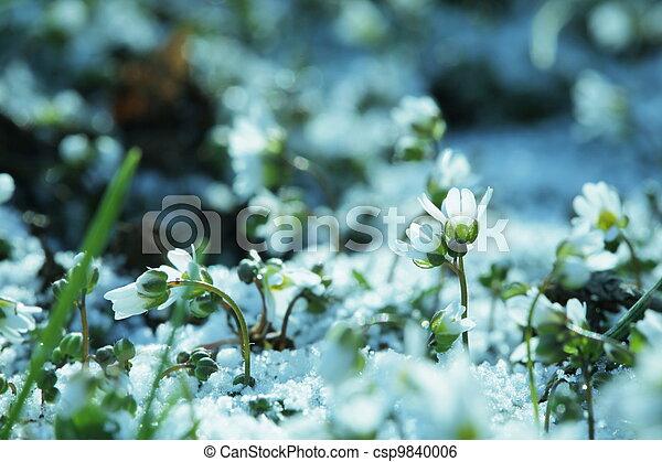 flores del resorte - csp9840006