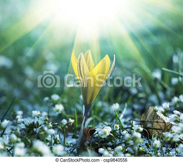 flores del resorte - csp9840556