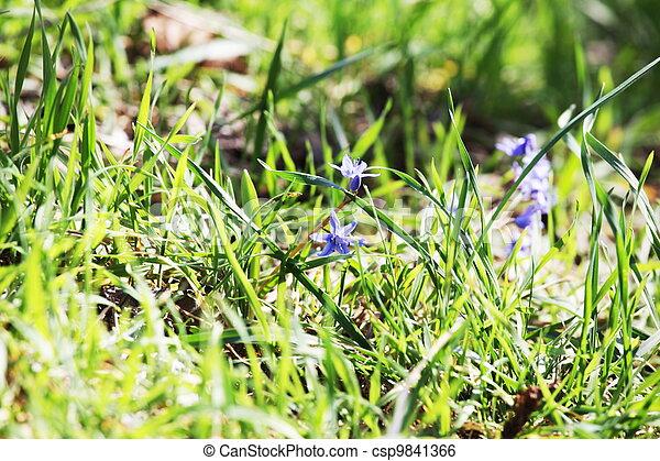 Flores de primavera - csp9841366