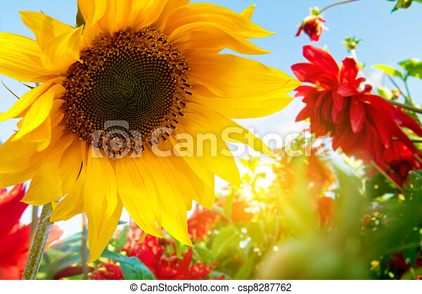 flores del resorte, jardín - csp8287762