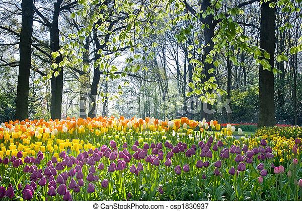 Flores de primavera en abril - csp1830937