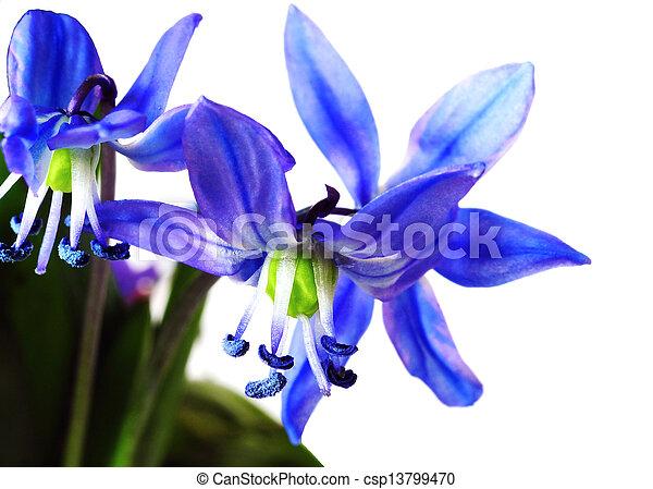 Flores de primavera - csp13799470