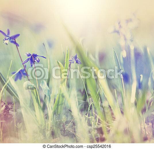 flores del resorte - csp25542016