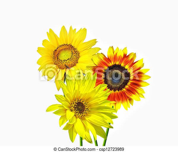 flores del resorte - csp12723989