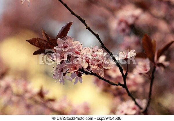 flores del resorte - csp39454586