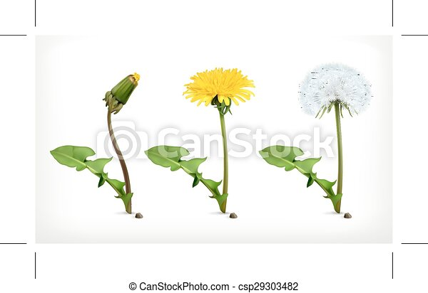 Flores de diente de león - csp29303482