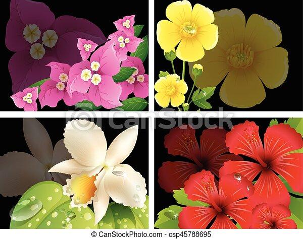 Flores de fondo negro - csp45788695