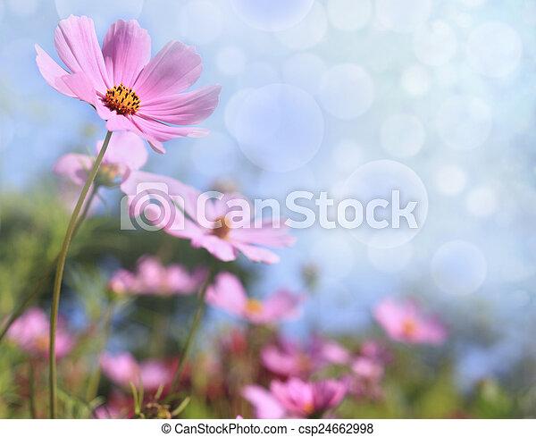flores - csp24662998