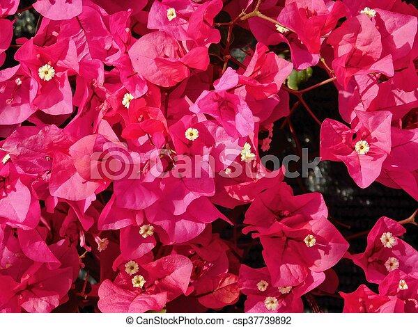 flores - csp37739892