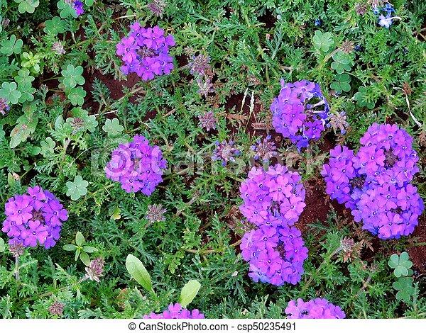 flores - csp50235491