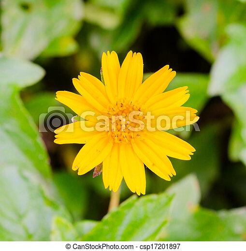 flores - csp17201897