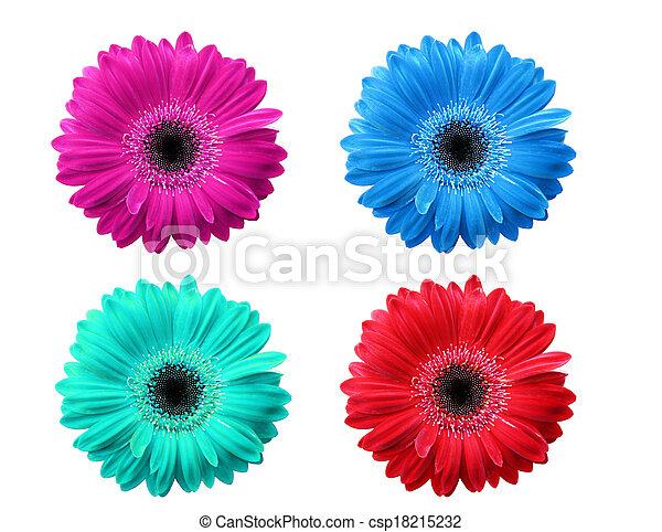 Flores de Gerber - csp18215232