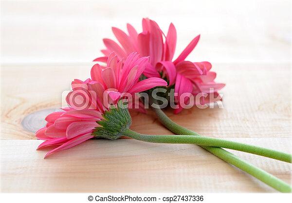 Flores de Gerber - csp27437336
