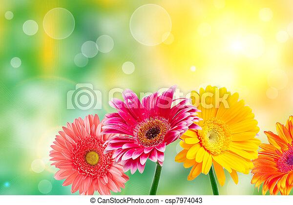 Flores Gerber - csp7974043
