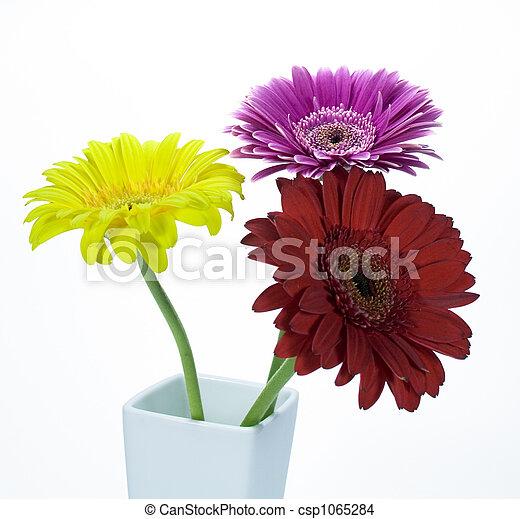 Flores Gerber - csp1065284