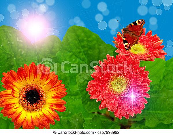 Flores Gerber - csp7993992